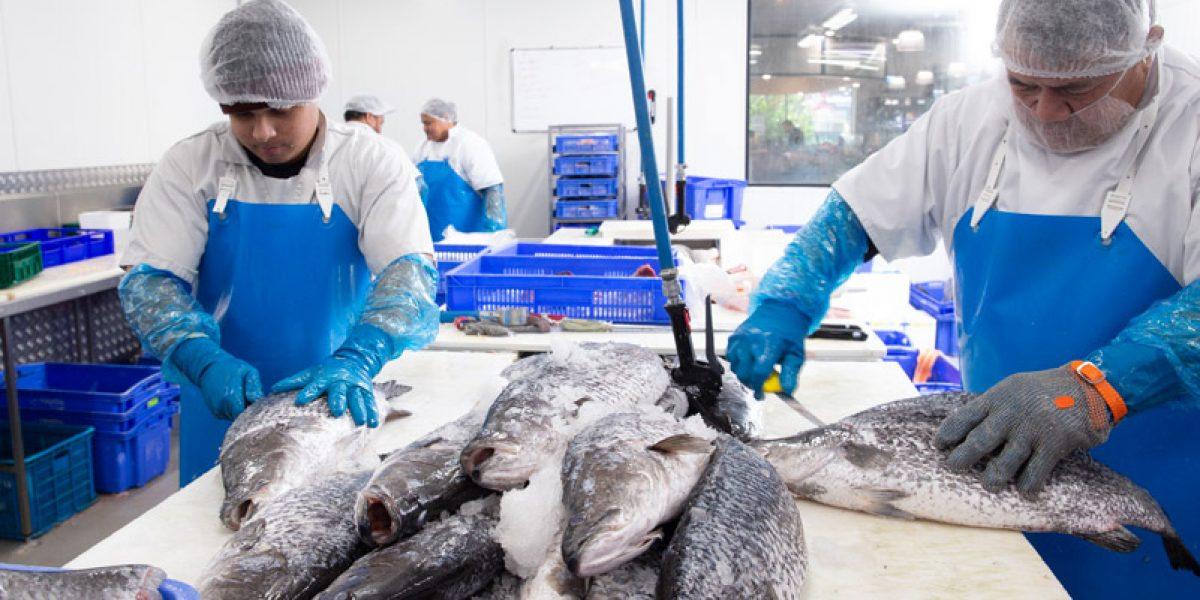 Wholesale-Seafood-3